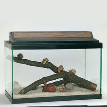Land Hermit Crab Terrarium Habitat Kit (with prepaid coupon)