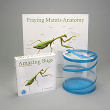 Praying Mantis Amazing Bugs® Kit