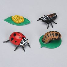 Ladybug Life Cycle Stages Set