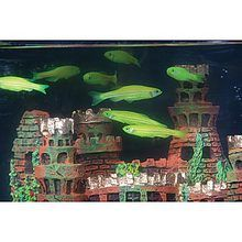 GloFish Fluorescent Zebra Fish, Electric Green, Pack of 4