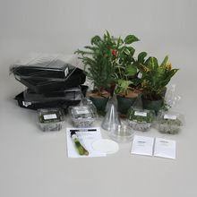 Plant Kingdom Survey Set, Living