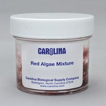Red Algae Mixture, Living