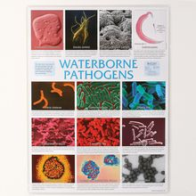 Waterborne Pathogens Pictomicrographs