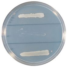 Bacterial Transformation Kit