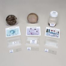 Student Independent Fungi Study Kits