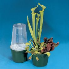 Jaws of the Jungle Carnivorous Plant Kit