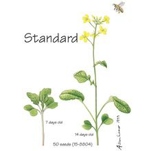 Wisconsin Fast Plants® Standard Seed (Improved Basic, Rbr), Pack of 200