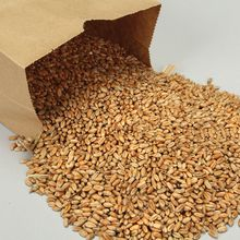 Wheat, Viable Seed, 1 lb