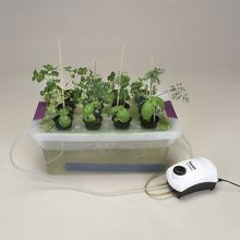 Visual Desktop Hydroponics Kit