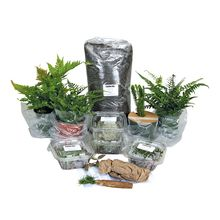 Large Woodland Terrarium Plant Set