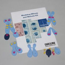 Modeling Mitosis and Meiosis 8-Station Kit