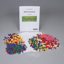 Carolina BioKits®: DNA Simulation 10-Station