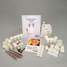 Drosophila Dihybrid Cross Kit