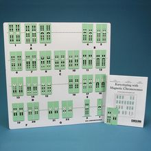Karyotyping with Magnetic Chromosomes, 8-Station Kit
