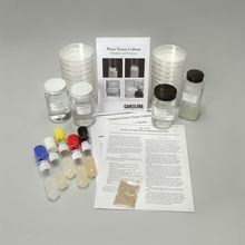 Lettuce Hormone Interaction Kit (with Perishables)
