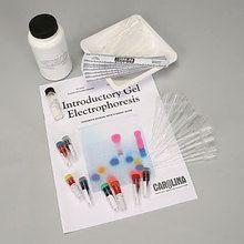 Introductory Gel Electrophoresis 8-Station Student Kit