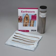 Earthworm Dissection BioKit®