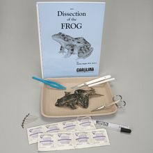 Frog Anatomy Kit with Dissecting Set