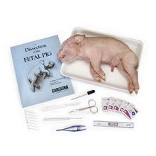 Pig Anatomy Kit with Dissecting Set