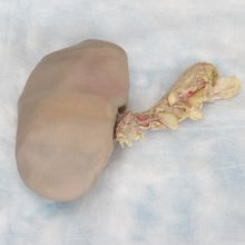 Formalin Pig Kidney, Double Injection, Bulk Bag