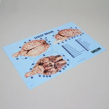 Carolina™ Brain Dissection Mat