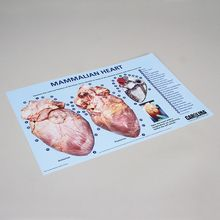 Carolina™ Heart Dissection Mat
