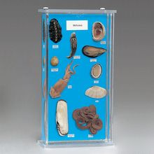 Mollusk Collection Biosmount