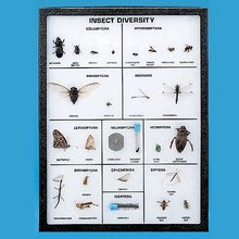 Insect Diversity, Biorama™ Preparation