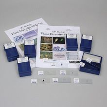 Plant Diversity Microscope Slide Classroom Set for AP® Biology