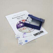 Bacteriology Survey Microscope Slide Sets