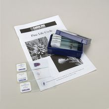 Pine Life Cycle Microscope Slide Set