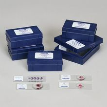 General Embryology Microscope Slide Set