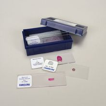 Blood and Lymph Vessels Microscope Slide Set