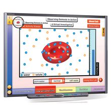 Multimedia Science Lessons for Interactive Whiteboards: Osmosis and Diffusion