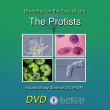 Branches on the Tree of Life: The Protists DVD