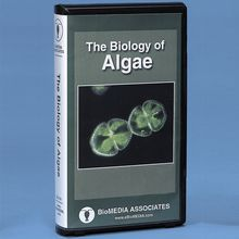 Branches on the Tree of Life: Algae DVD