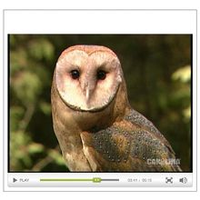 An Introduction to Barn Owls Video
