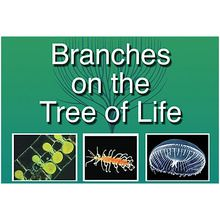 BioMEDIA Video: Branches on the Tree of Life: Arthropods (1-Year Schoolwide Subscription)