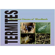 BioMEDIA Video: Termites: The Secret Queens of the Forest (1-Year Schoolwide Subscription)