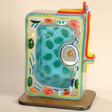 Plant Cell Model, Staco