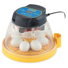 Quail Egg Insert for Mini Advance Incubator