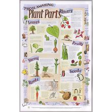 Functions of Plant Parts Poster