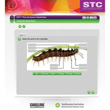 STC™ The Life Cycle of Butterflies Interactive Whiteboard Activity