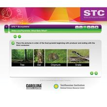 STC™ Ecosystems Interactive Whiteboard Activity