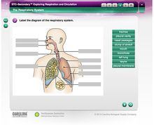 STC–Secondary™: Exploring Respiration and Circulation Interactive Whiteboard Activity