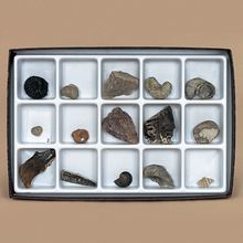 Mesozoic Fossil Collection