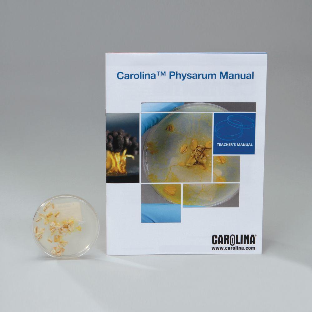 The life cycle of physarum polycephalum