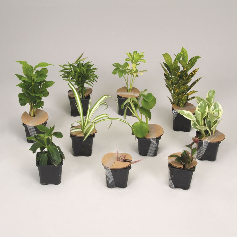 tropical plant care instructions