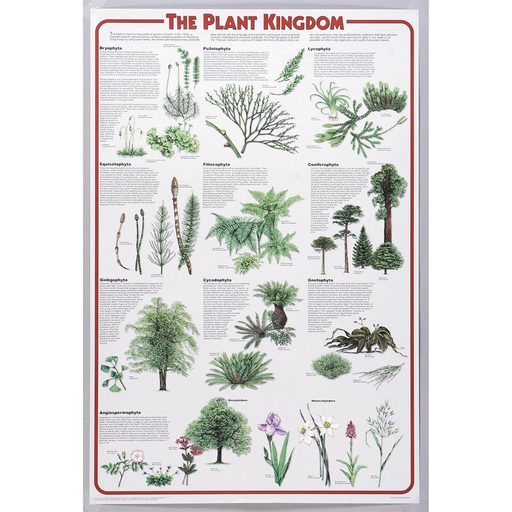 Plant Kingdom Chart | Carolina.com