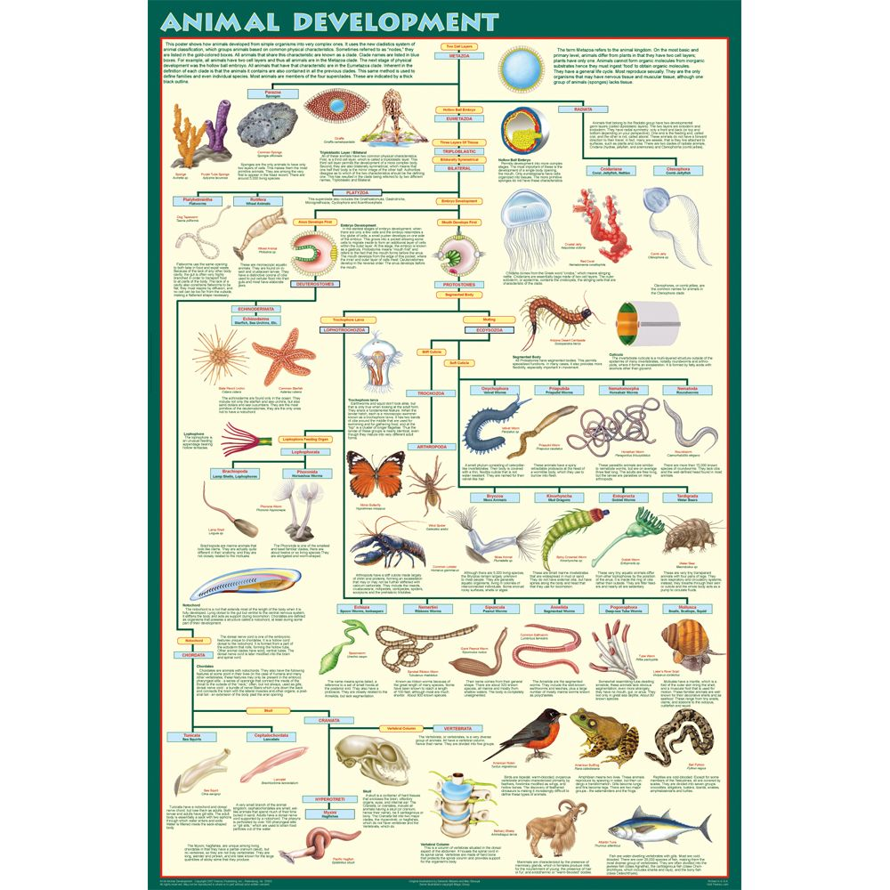 Animal Classification Chart For Kids Printable | www ...